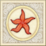 DM-By The Shore - Seashell 9 - Accent Tile