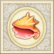 DM-By The Shore - Seashell 12 - Accent Tile