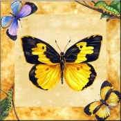 Dogface Butterfly with Background    - Tile Mural