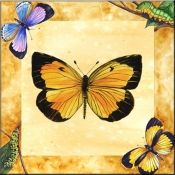 Sleepy Orange Butterfly     - Tile Mural