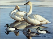 Swans and Goldeneyes-CF - Tile Mural