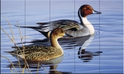 Pintail Pair II-CF - Tile Mural