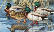 Early Ice Mallards-CF - Tile Mural