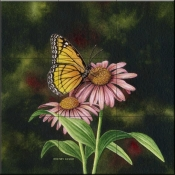 Coneflower Of Choice 1-DE - Tile Mural
