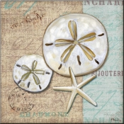 Linen Shells II - PB - Accent Tile