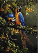 Blue and Gold Macaw    - Tile Mural