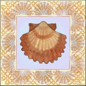 Seashell Square 6 - DF - Accent Tile