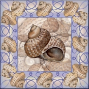 Seashell Square 7 - DF - Accent Tile