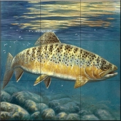 Brown Trout-CF - Tile Mural