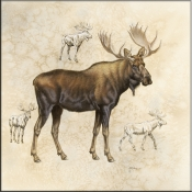 JG-Moose 1 - Accent Tile