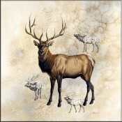 JG-Elk - Accent Tile