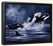 Orcas  2 -Canvas Art Print