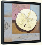 Sanddollar Collage   -Canvas Art Print