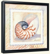 Bordered Shell Nautilus   -Canvas Art Print