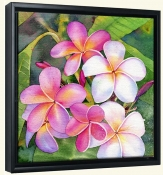 Plumeria  -Canvas Art Print