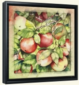 Apples  -Canvas Art Print