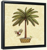Coconut Palm 4  -Canvas Art Print