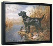 Black Lab with Decoys -Canvas Art Print