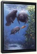 SB-Manatee A New Friend -Canvas Art Print