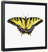 Single Tiger Swallowtail Butterfly   -Canvas Art Print