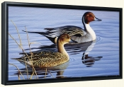 Pintail Pair II-CF-Canvas Art Print