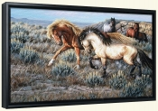 Two Mustang Stallions-CF-Canvas Art Print