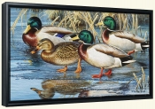 Early Ice Mallards-CF-Canvas Art Print