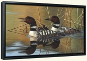 Loon Family-CF-Canvas Art Print