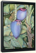 Banana Blossom   -Canvas Art Print