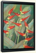 Heliconia   -Canvas Art Print