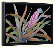 Bromeliad IV   -Canvas Art Print