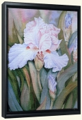 Iris   -Canvas Art Print