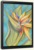 Bird of Paradise III   -Canvas Art Print