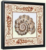 Seashell Square 1-DF-Canvas Art Print