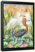 Reddish Heron Two Phases-RS-Canvas Art Print