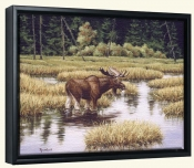 Lone Bull -RD-Canvas Art Print