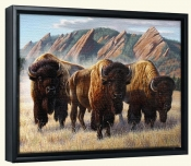 Bison Under The Flatirons-CF-Canvas Art Print