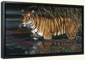 Bengal Beauty-CF-Canvas Art Print