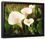 Calla Lilies-LSH-Canvas Art Print