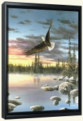 Eagle In Flight   -Canvas Art Print