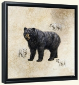 Black Bear   -Canvas Art Print