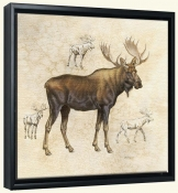 Moose  5 -Canvas Art Print