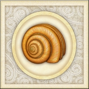 DM-By The Shore - Seashell 6 - Accent Tile