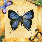 Great Purple Hairstreak Butterfly with Background    - Tile Mural