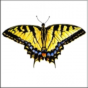 Single Tiger Swallowtail Butterfly    - Tile Mural