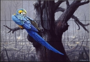 Blue and Yellow Macaw in a Burned Forest    - Tile Mural